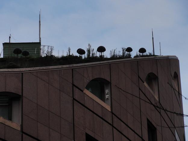 屋上にデカきのこ発見