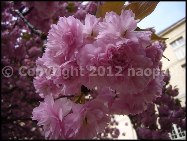 写真: P3060753