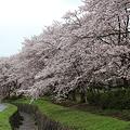 Photos: 2012.4.27 桜
