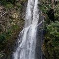 Photos: 賀茂郡西伊豆町大沢里 大滝 2012.2.27