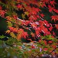 写真: 『秋の足音。。。』