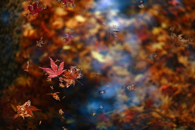 写真: 『過ぎ去りし秋。。。』