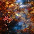 『過ぎ去りし秋。。。』