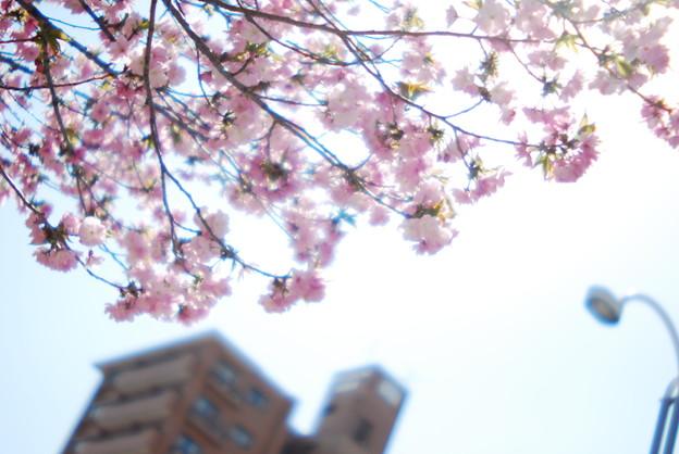 Sakurayama Sakura.