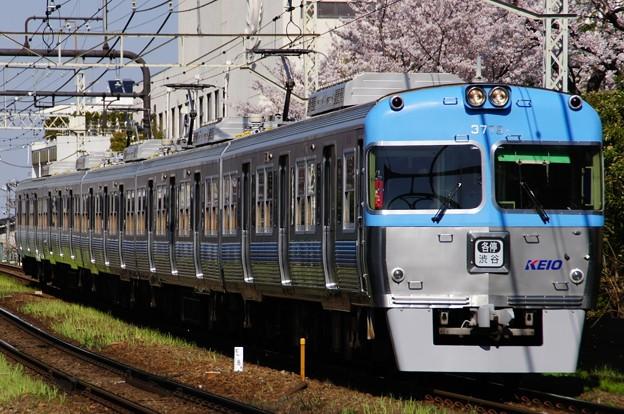 Photos: 満開の桜の横を駆け抜ける3000系