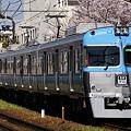 満開の桜の横を駆け抜ける3000系