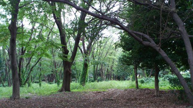 Photos: 2011100204