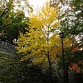 Photos: 盛岡城跡公園(岩手公園)・2