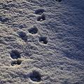 tracks.