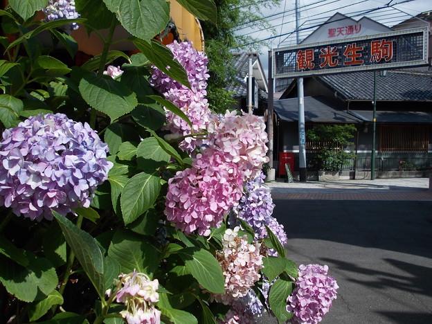 Photos: 聖天通り