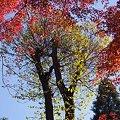 写真: 青空に映える