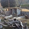 写真: 東山動植物園_08:ビーバーとその餌を狙うカラス