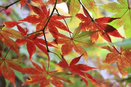 十和田の紅葉 (3)
