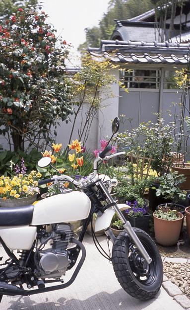 バイクと庭