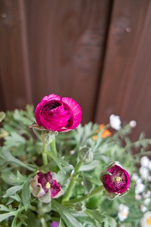 flower03242012dp2-02