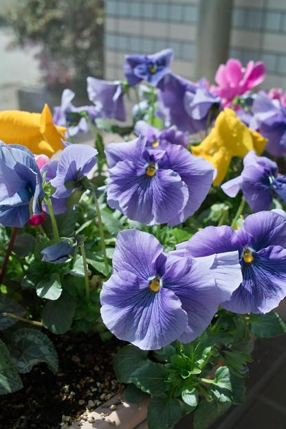 Photos: flower03292012dp2-04