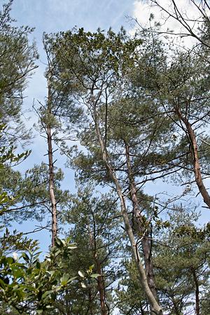 trees04062012dp2-01