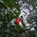 Photos: Flower04092012dp2-08