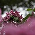 写真: ピンクのブーケ
