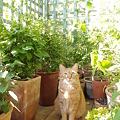写真: Garden Cat