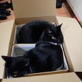 写真: 箱猫
