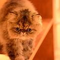 Photos: うるさん