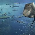Photos: 水族館の写真で涼みましょ