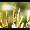 Photos: 雑草だって輝くんだ!