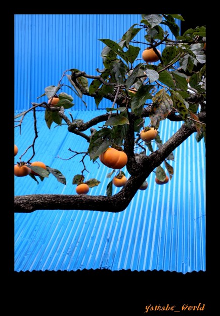 Photos: 青と橙色