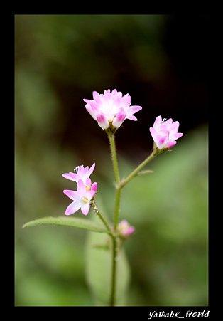 なんかこんな感じで咲いてた花