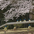 桜の幼精たち
