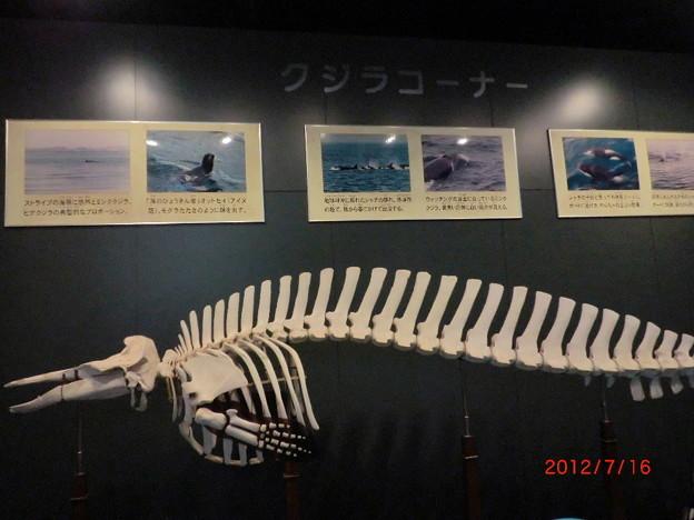 室蘭水族館(2012.7).16