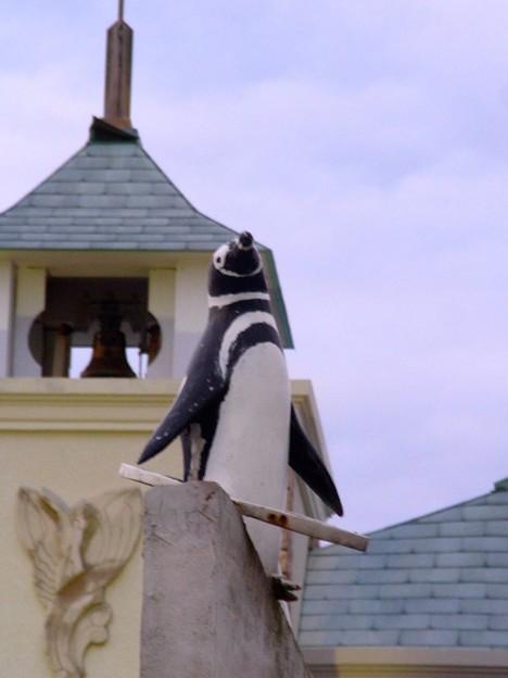 20120114 犬吠埼 出張ペンギンズ04