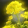 「花の回廊 早春の草花展」(1)