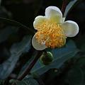 Photos: 花弁。
