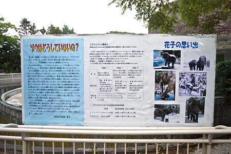 mauyama110705267