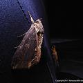 写真: yamanao999_insect2011_324