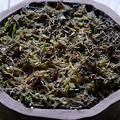 写真: サギ草、二年目の発芽