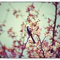 Photos: 春イチバンドリ☆