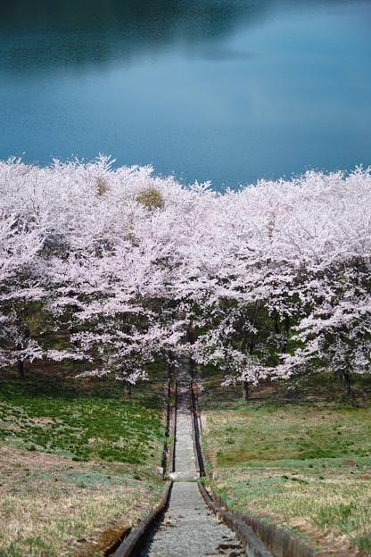 桜園への階段