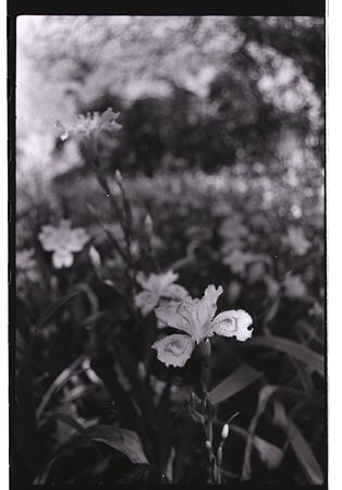 201104-03-002PZ