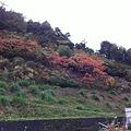 20111108岡崎