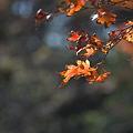 源氏山公園の紅葉その3