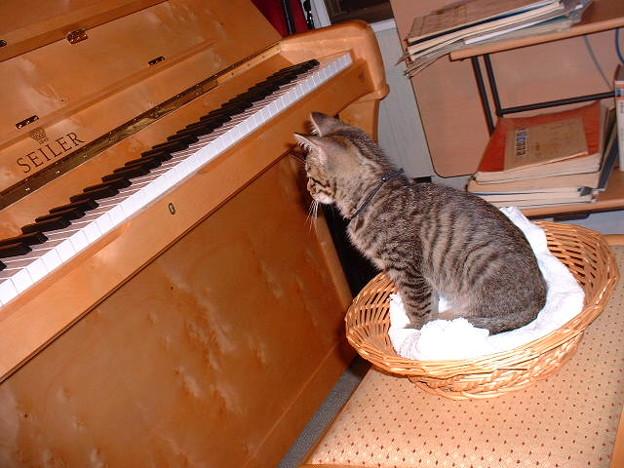 ピアニスト志望