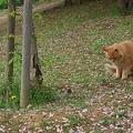猫 VS ○○ 2