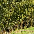 早春の竹林