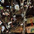 Photos: 報徳二宮神社
