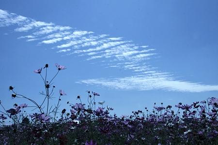 雲と 秋桜