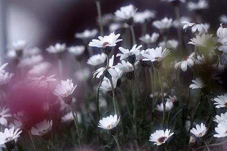 セレブの花達~~