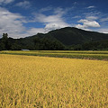 Photos: 高原も黄金色
